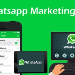 Como Desarrollar Una Campana De Marketing En Whatsapp En 5 Pasos